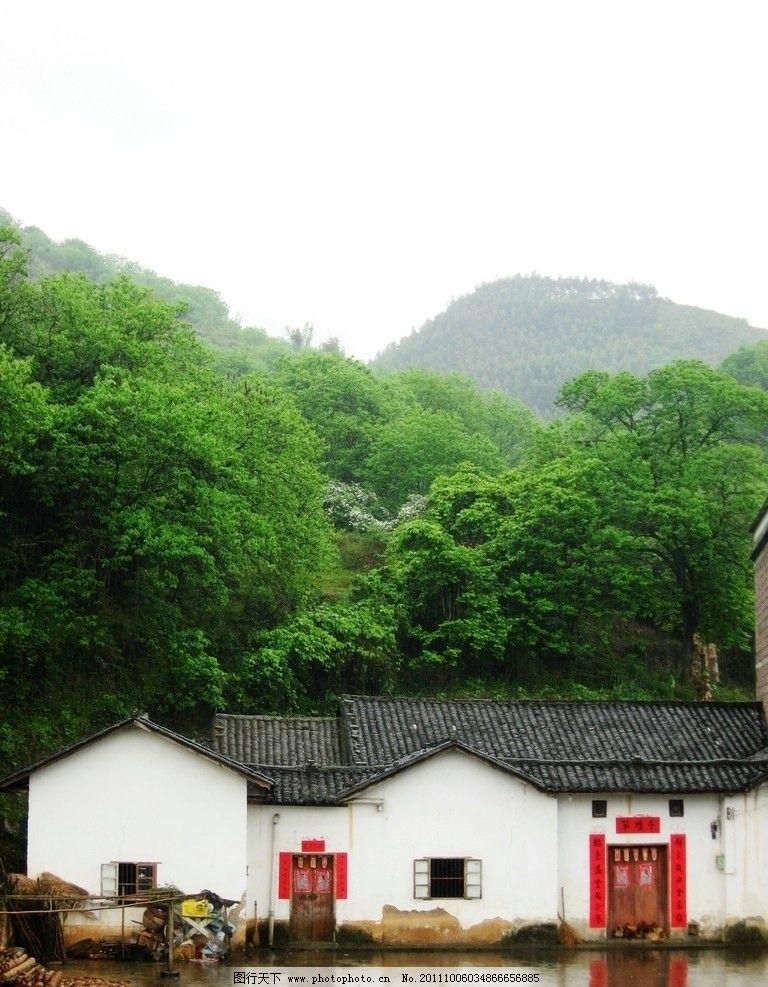 绿树与房子图片