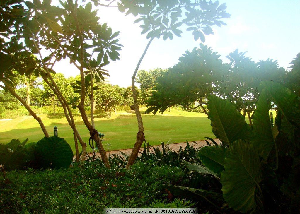 生态公园 草地 绿地 草坪 园艺 大树 树丛 大自然 生态旅游