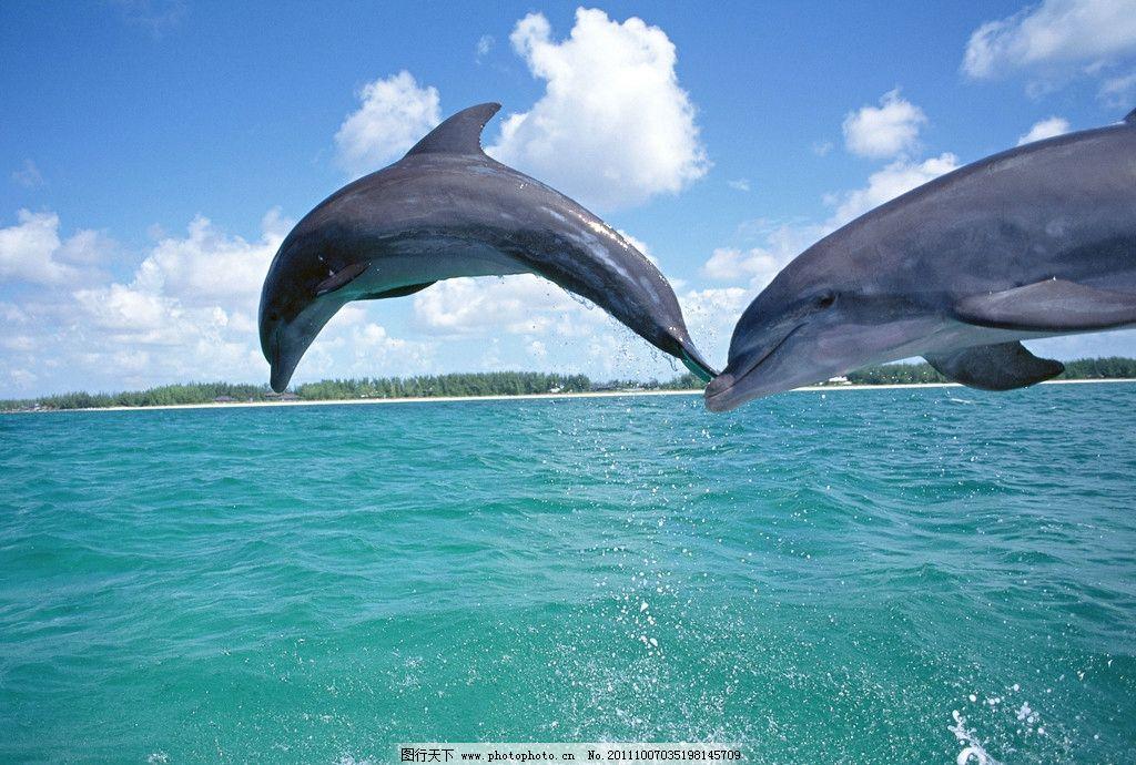 海洋世界 海洋动物 大海 海豚 海洋生物 生物世界 摄影 350dpi jpg