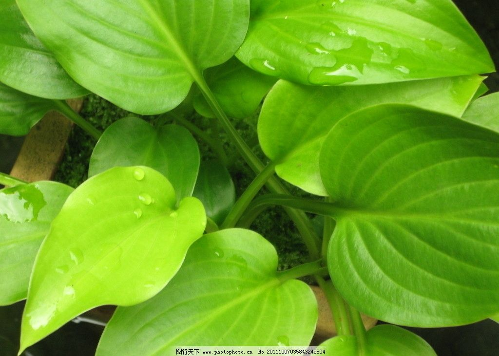 背景 壁纸 绿色 绿叶 盆景 盆栽 树叶 植物 桌面 1024_731
