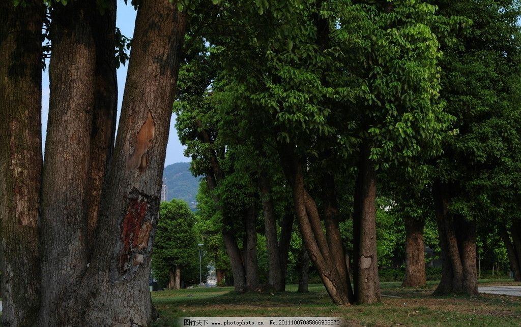 美丽的树木风景图片
