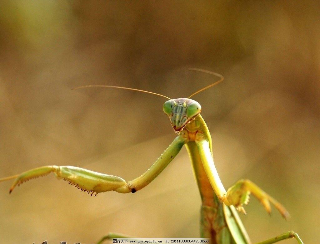 少儿手工制作螳螂
