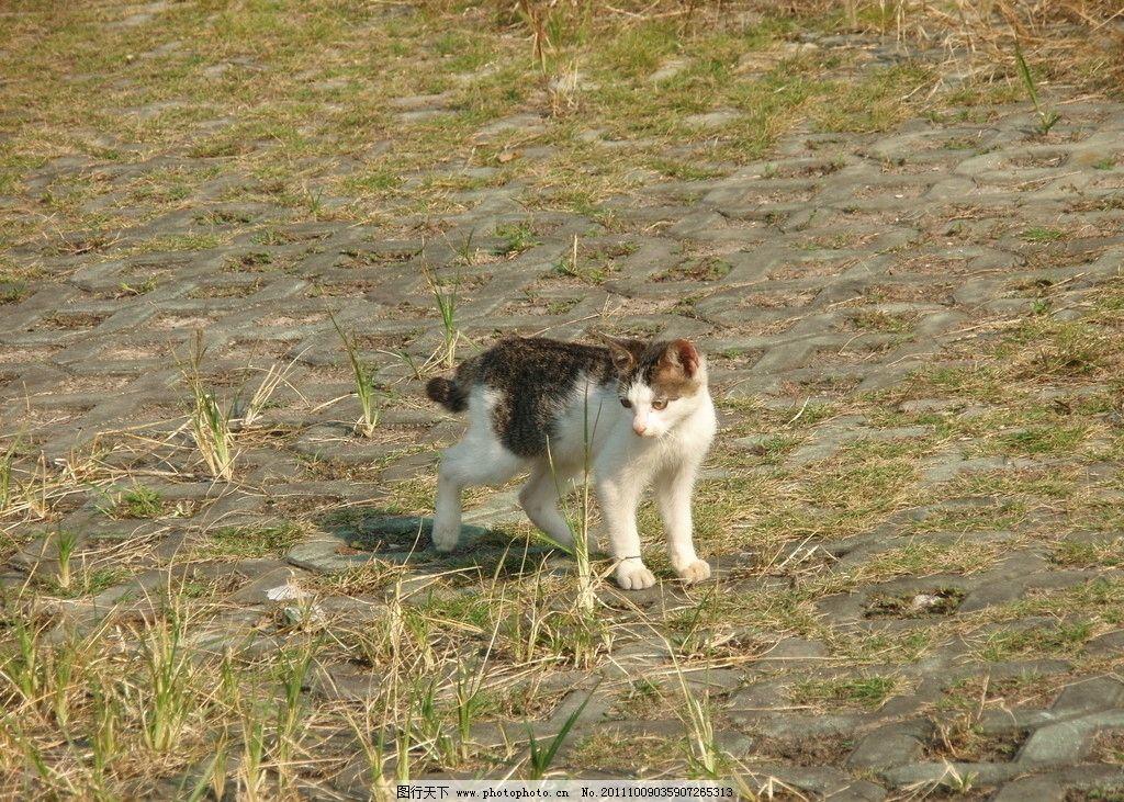 孤独的猫图片