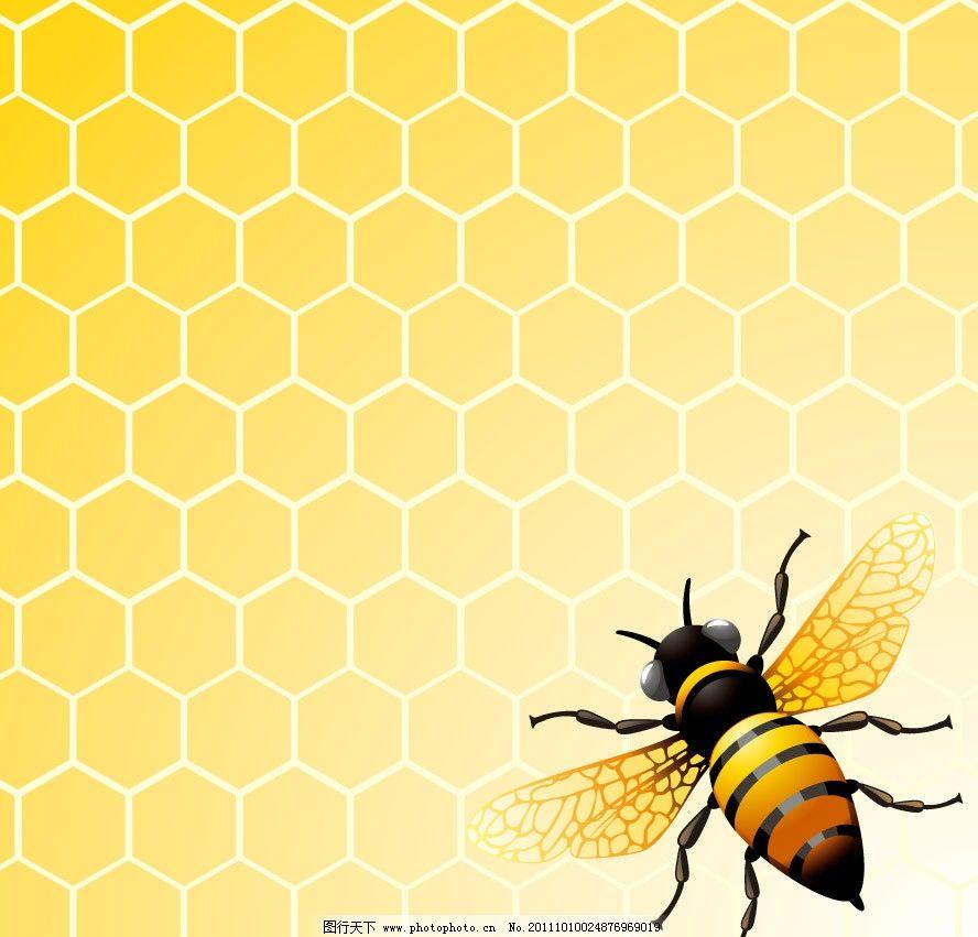 蜂巢 时尚 潮流 梦幻
