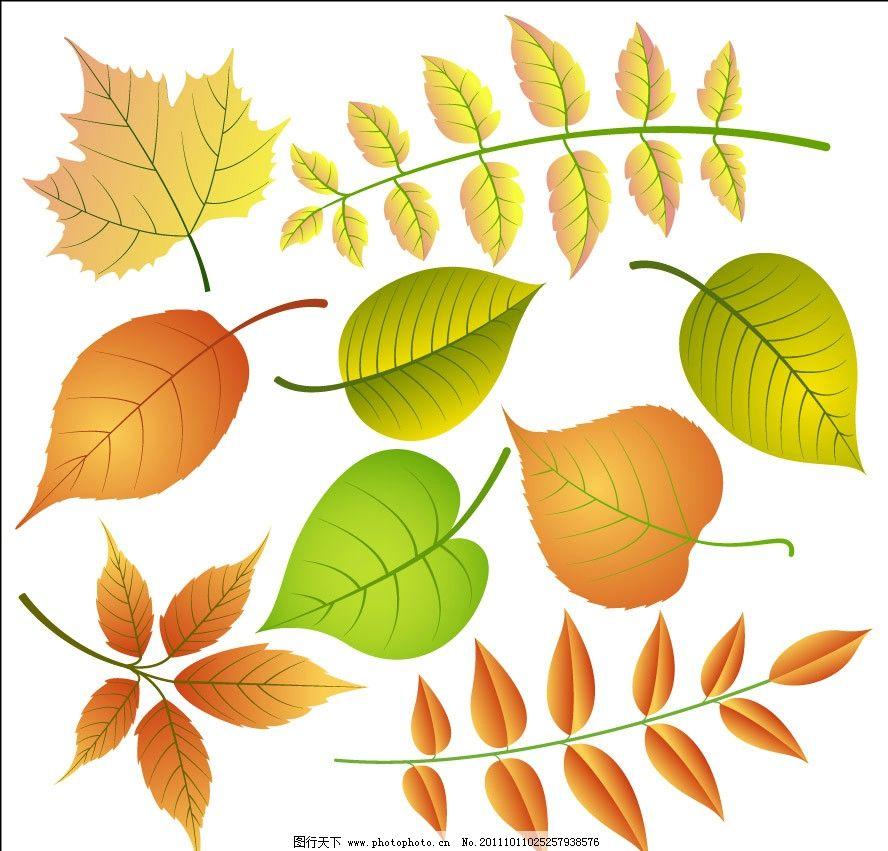 手绘绿叶枫叶红叶图片