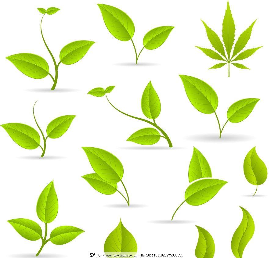 手绘绿叶 手绘 绿叶 树叶 枫叶 线条 时尚 绿色 矢量 植物主题 树木