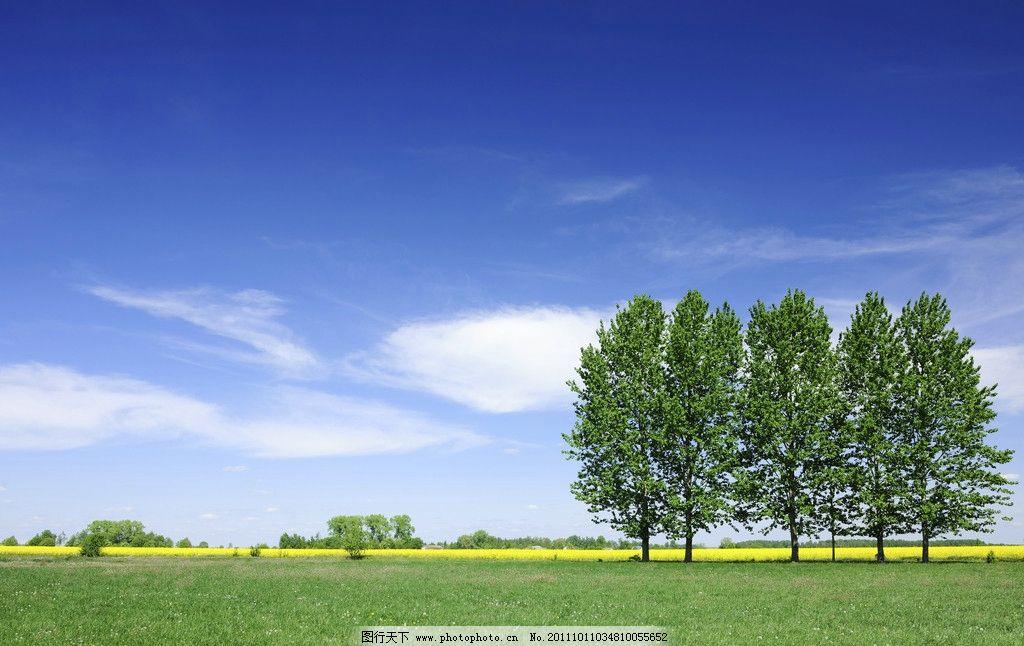 蓝天下的树 绿树 蓝天图片