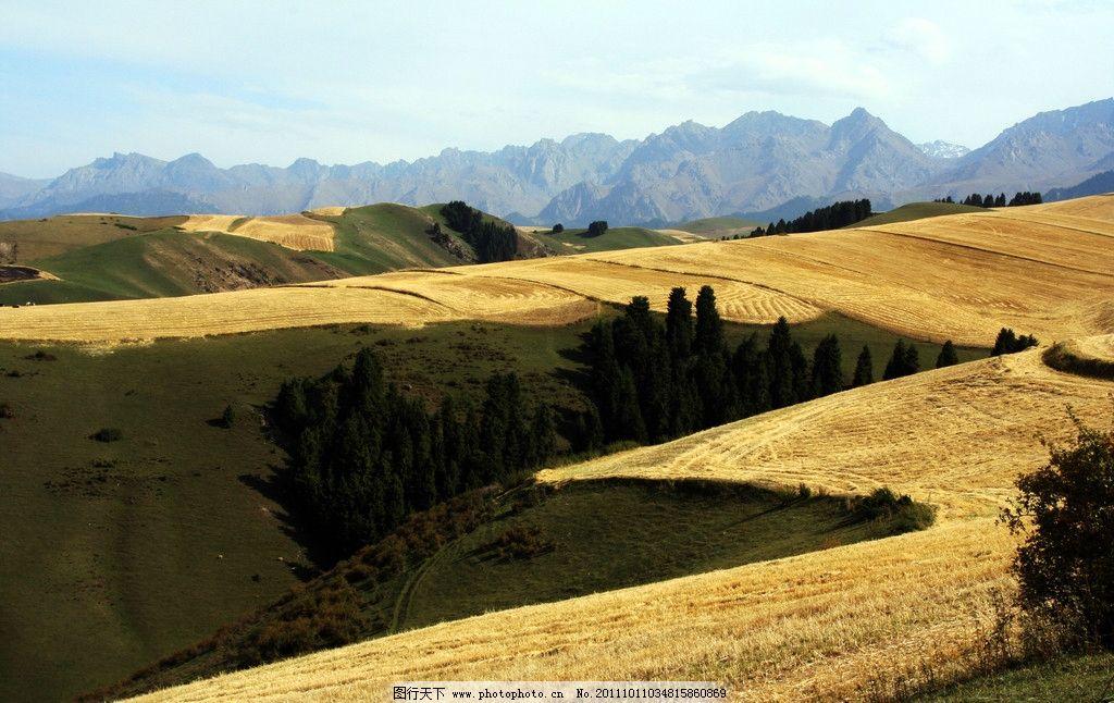 麦田 山道 麦茬 松树 山麦 远山 蓝天 自然风景 自然景观 摄影 72dpi