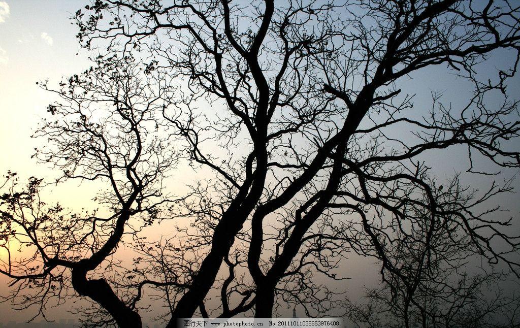枯树剪影图片