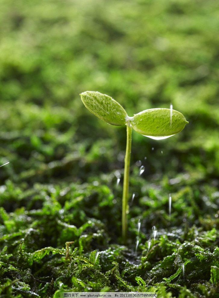 种子发芽图片
