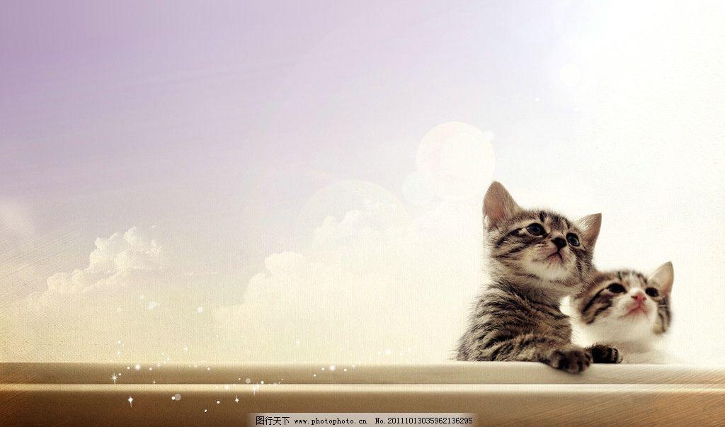 小葫猫 遥望 可爱的猫 两只猫 摄影