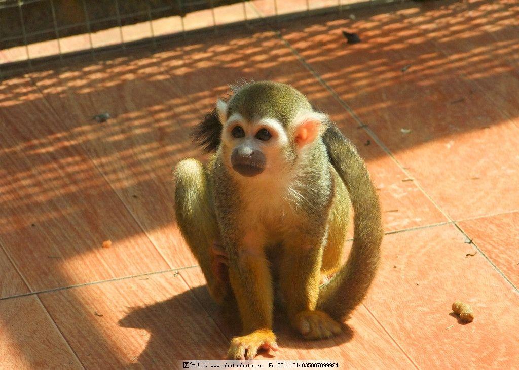 晒太阳 猴子 长尾猴 动物 中山公园动物园 野生动物 生物世界