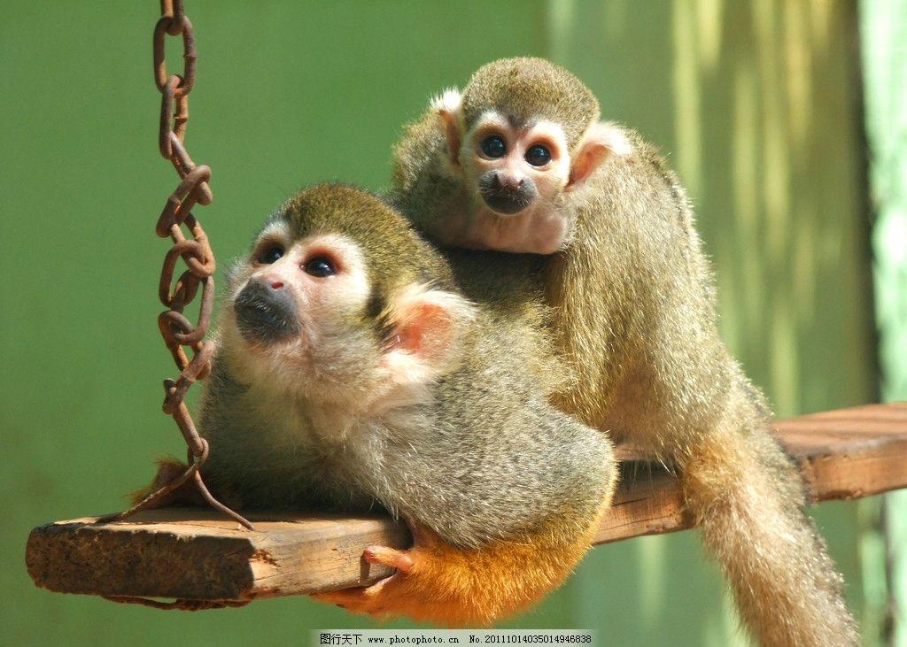 慈爱 猴子 长尾猴 动物 中山公园动物园 摄影