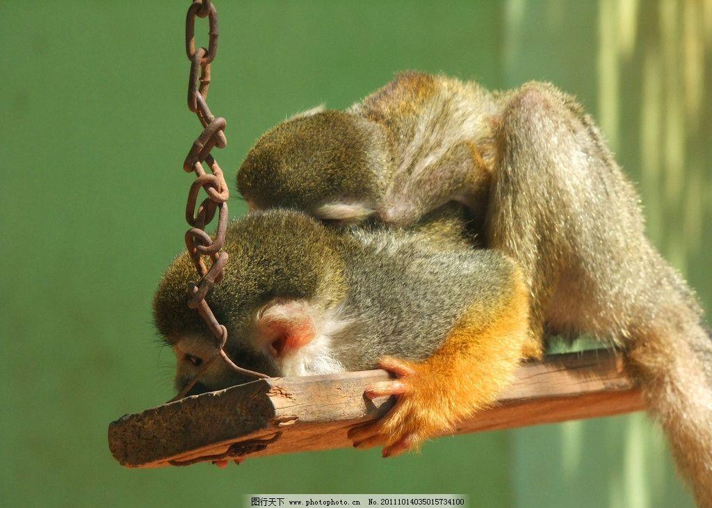 慈爱 猴子 长尾猴 动物 中山公园动物园 野生动物 生物世界 摄影