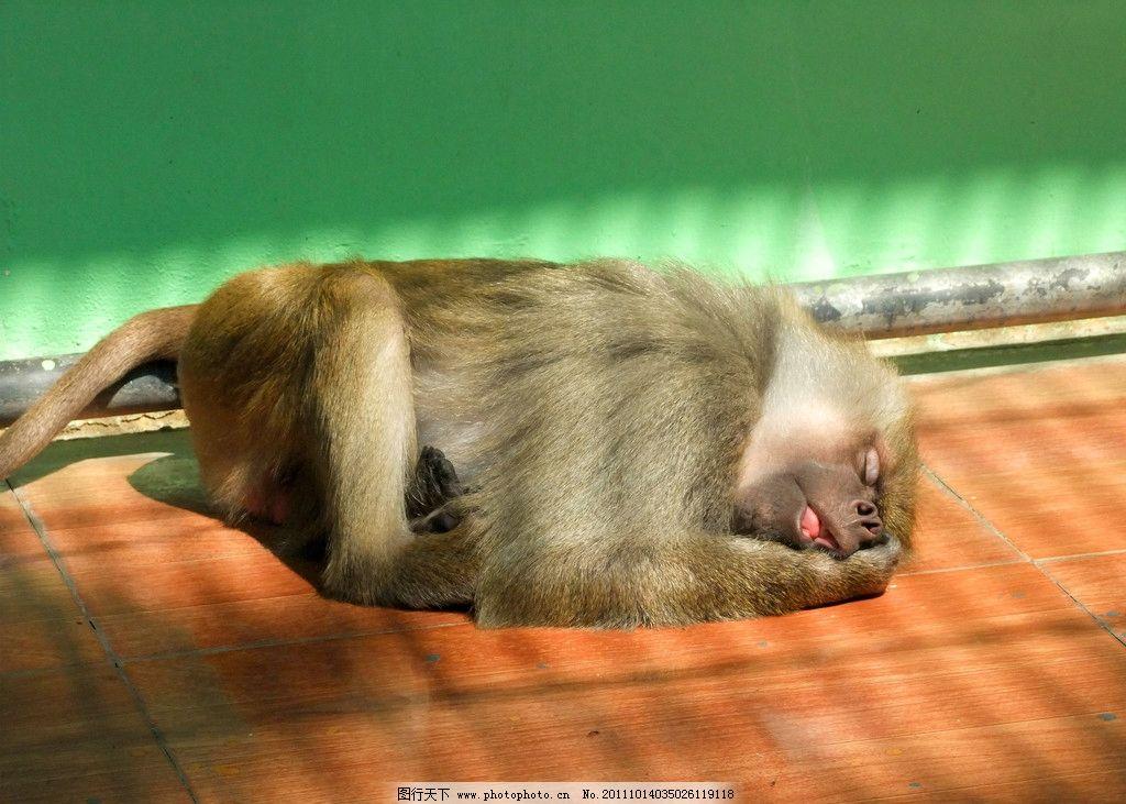 悠闲猴子 长尾猴 动物 中山公园动物园 摄影