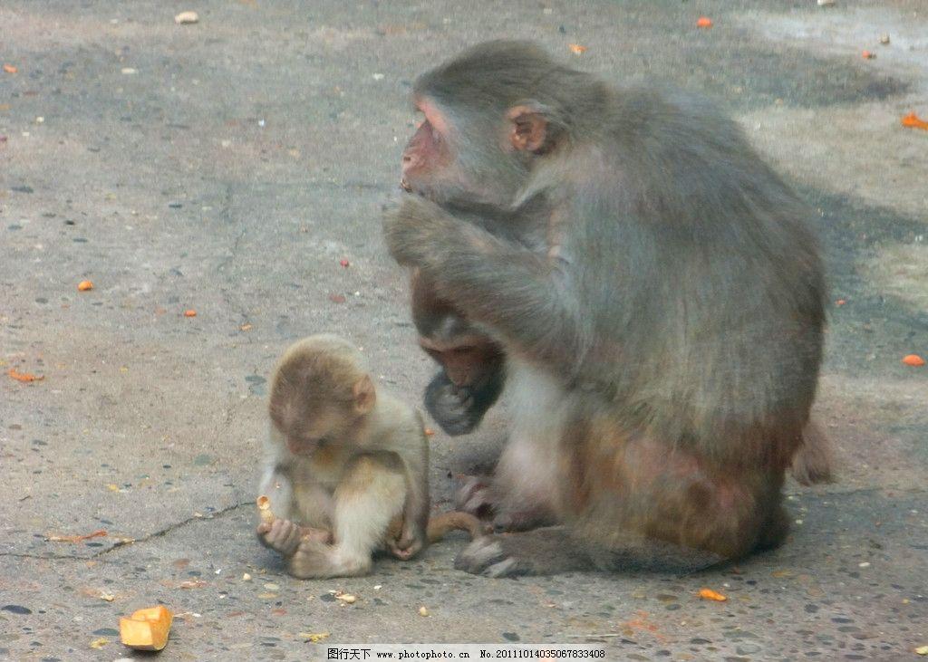 母子 猴子 动物 中山公园动物园 野生动物 生物世界 摄影