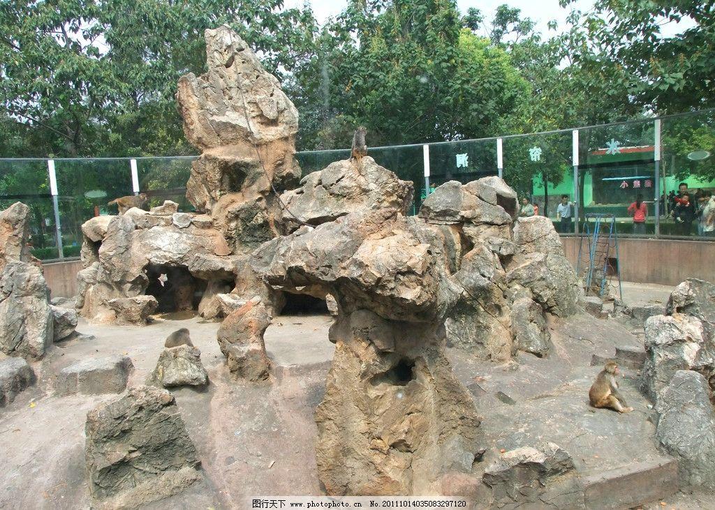 猴山 猴子 动物 假山 中山公园动物园 野生动物 生物世界 摄影 72dpi