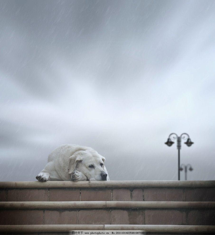 宠物狗 酷狗 各种狗 动物 宠物 动物世界 高清图片 高清动物 高清小狗