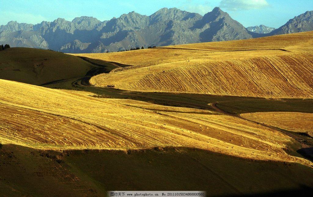 麦田草地 麦田 榆树 远山 蓝天 山道 自然风景 自然景观 摄影 72dpi j