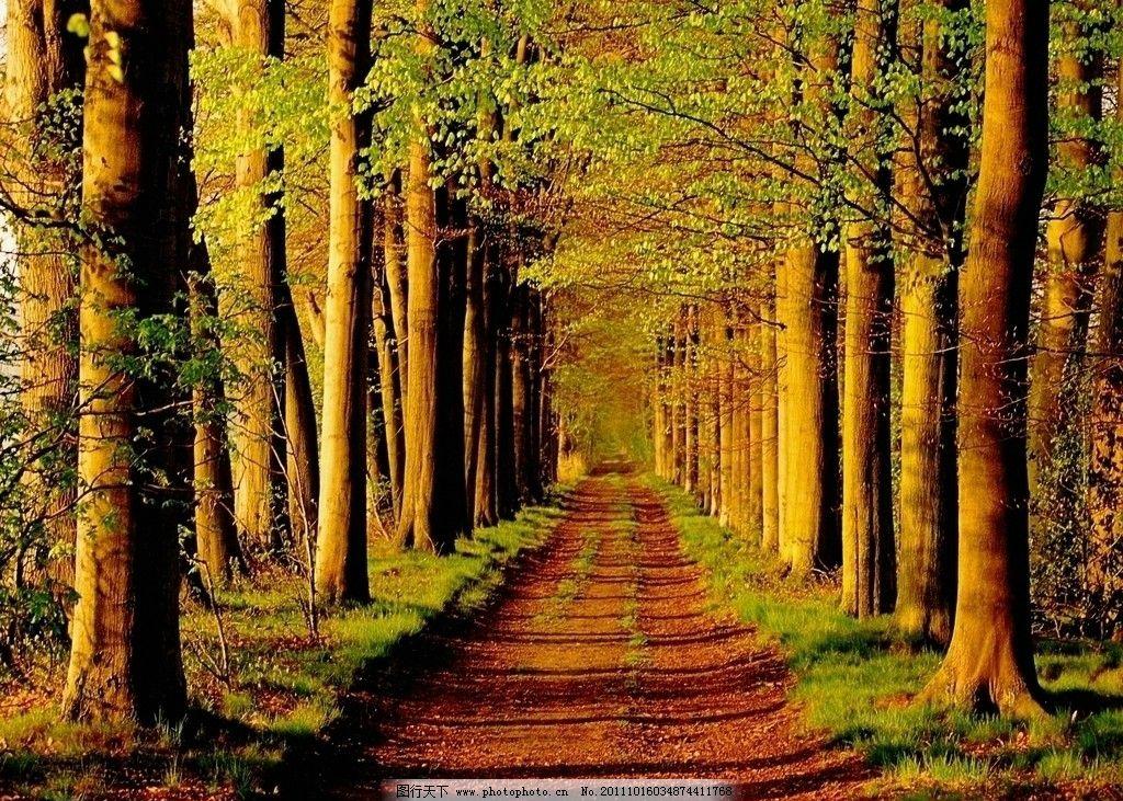 壁纸 风景 森林 桌面 1024_731