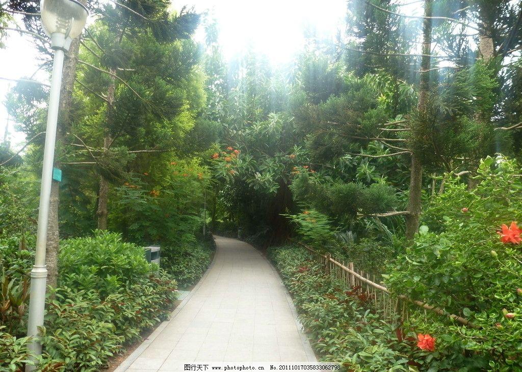 树林 树木树叶 生物世界 摄影 自然景观 风景 道路 公园 园林设计