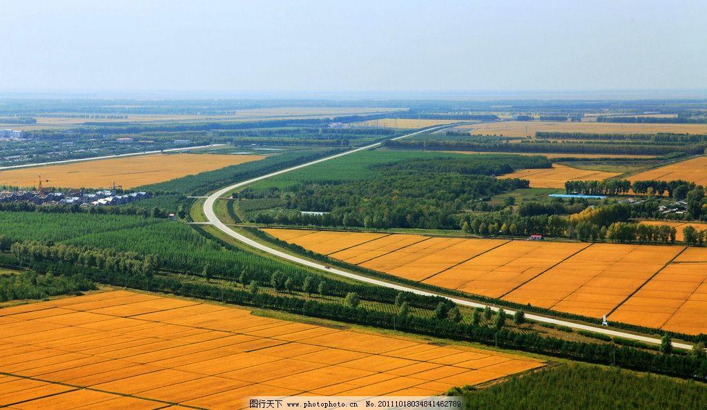 金色田野 绿地 万亩良田 北大荒 自然风景 自然景观 摄影