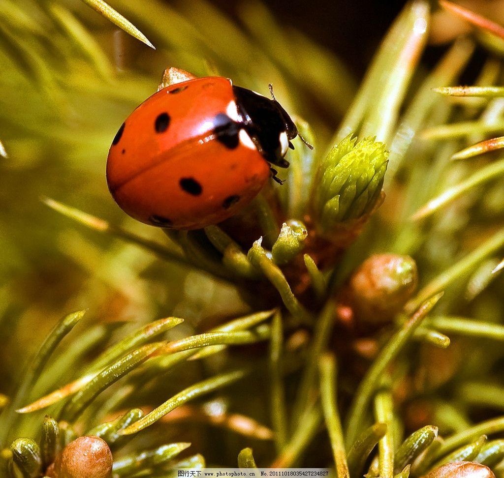 瓢虫 动物图片 昆虫摄影 昆虫图片 瓢虫素材 瓢虫图片 昆虫 生物世界