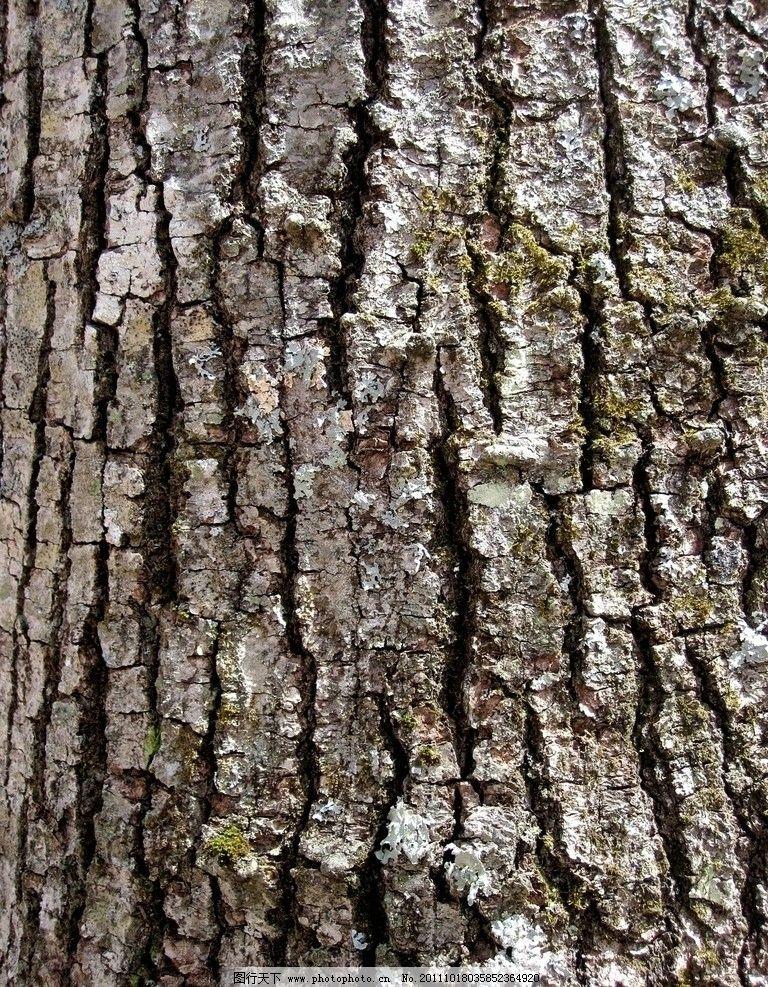 老树皮 树木 树皮 木质 木头 材质 木纹材质 纹理 底纹 树木树叶 生物