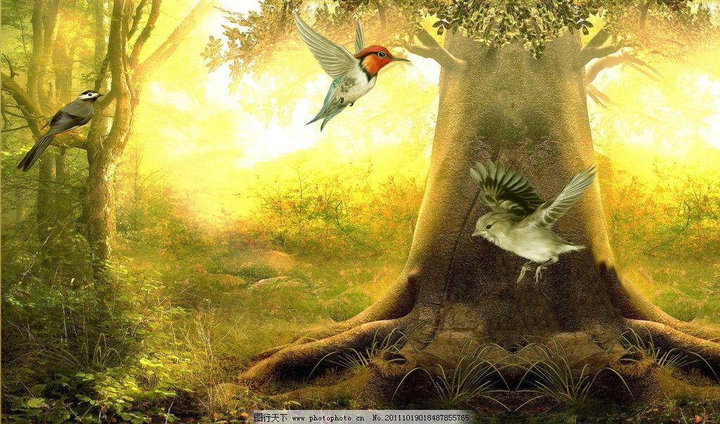 森林小鸟图片