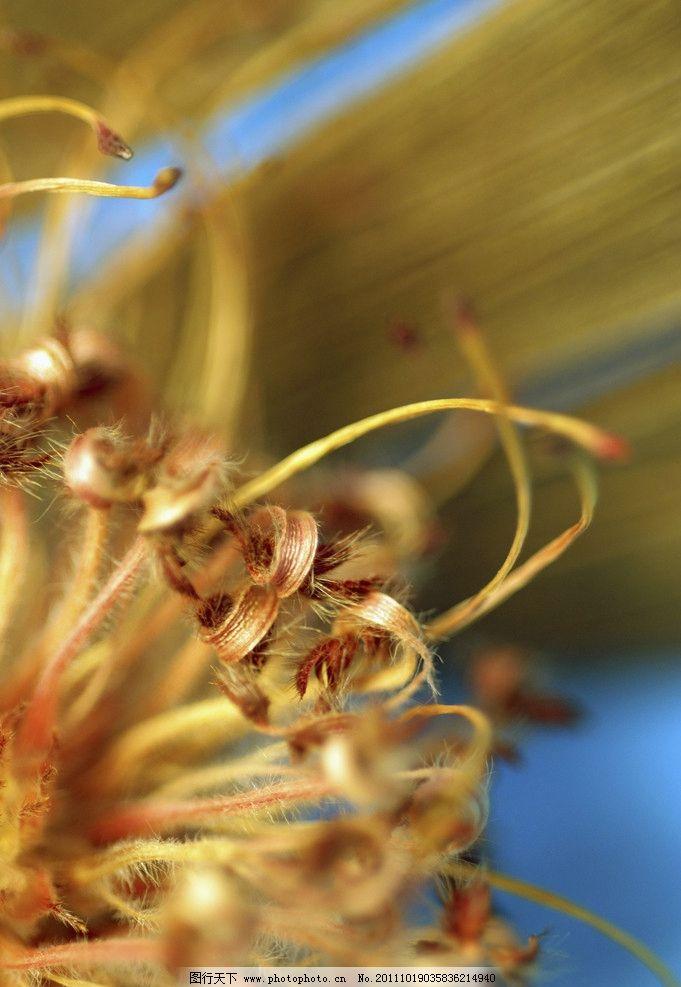 树叶背景 树叶 树叶纹理 树叶特写 树木树叶 纹理 肌理 材质 背景