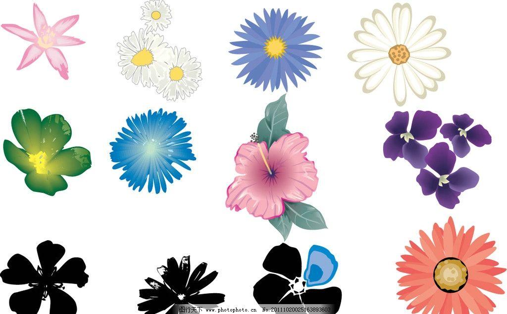 绚丽小花朵图片