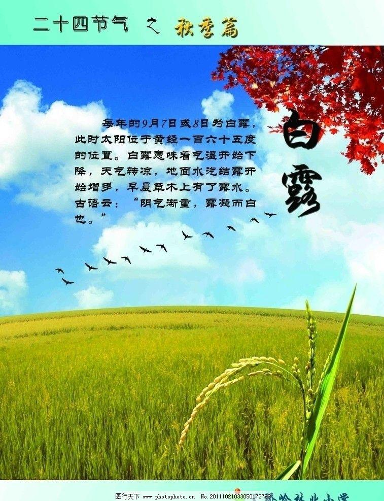 二十四节气 秋季篇 白露图片