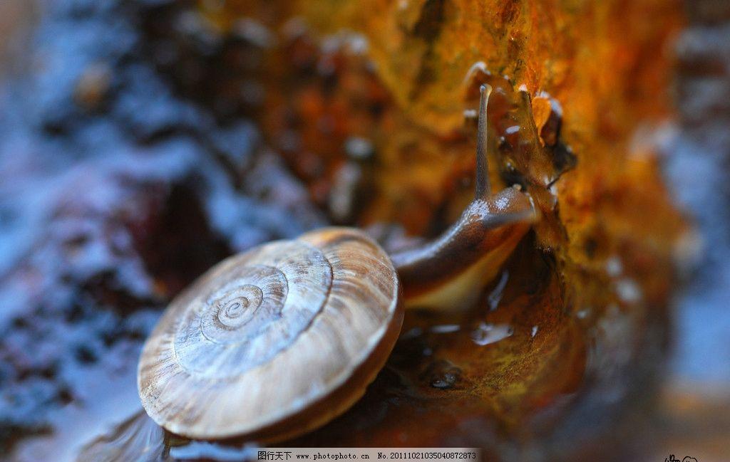 蜗牛 小动物 野生动物 软体动物 生物世界 摄影 300dpi jpg