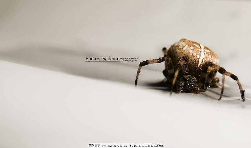 蜘蛛 动物 节肢动物 生物 捕食 自然 摄影