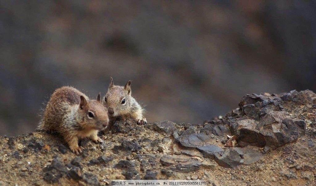 小松鼠图片,两只 可爱的小松鼠 野生动物 生物世界-图