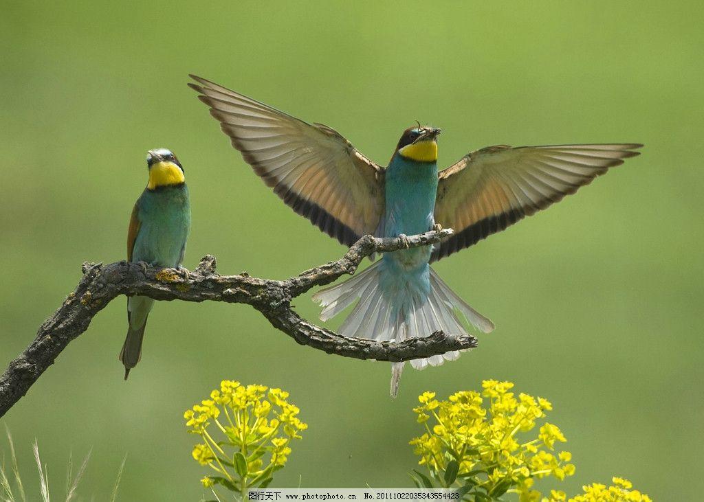 鸟儿 灵气鸟儿 枝头休憩鸟 飞鸟 鸟类 生物世界 摄影 壁纸 花草树木