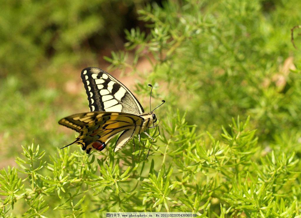 漂亮小蝴蝶 蝴蝶 昆虫 自然 小草 植物 彩蝶 小花 树丛 生物世界 摄影