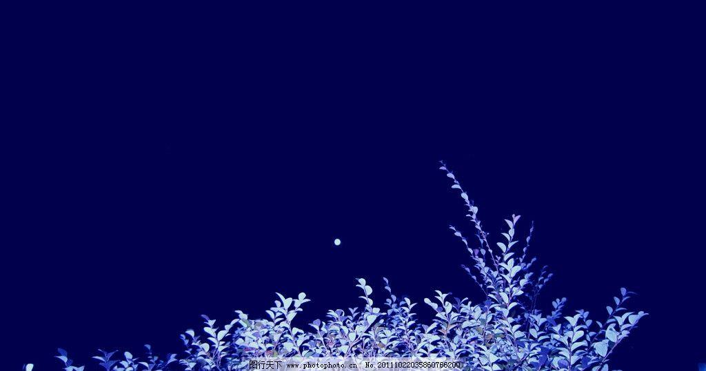 八月十五的月亮 湘潭白石公园 夜晚 天空 月亮 树木 明亮 月圆 树木