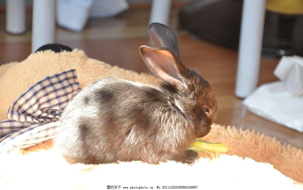 壁纸 动物 兔子 1024_643