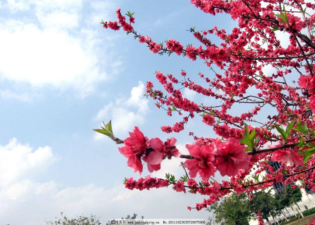 梅花 红花 绿叶 叶子 花瓣 植物 花草 生物世界 摄影 180dpi jpg