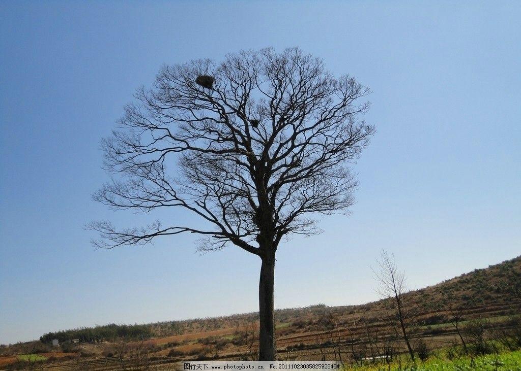 冬天的树 枯树 冬日 田野 蓝天 树木树叶 生物世界 摄影 72dpi jpg