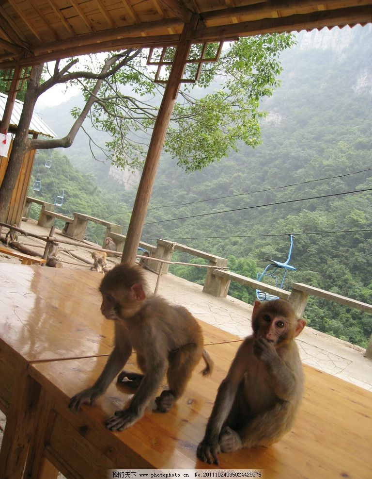 猴子 猴 小猴 猕猴 风景 旅游 摄影 动物 建筑 木房子 木桌 植物 缆车