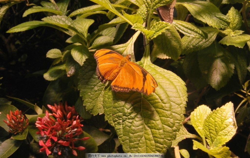 蝴蝶 蝶类 昆虫 节肢动物 生态 自然界 生物 野生动物 生物世界