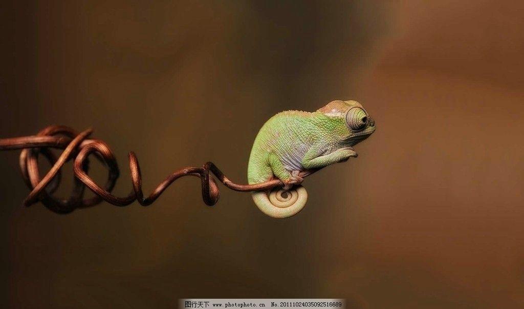 蜥蜴 动物 生态 特写 蜥蜴特写 可爱的蜥蜴 局部蜥蜴局部 大千世界