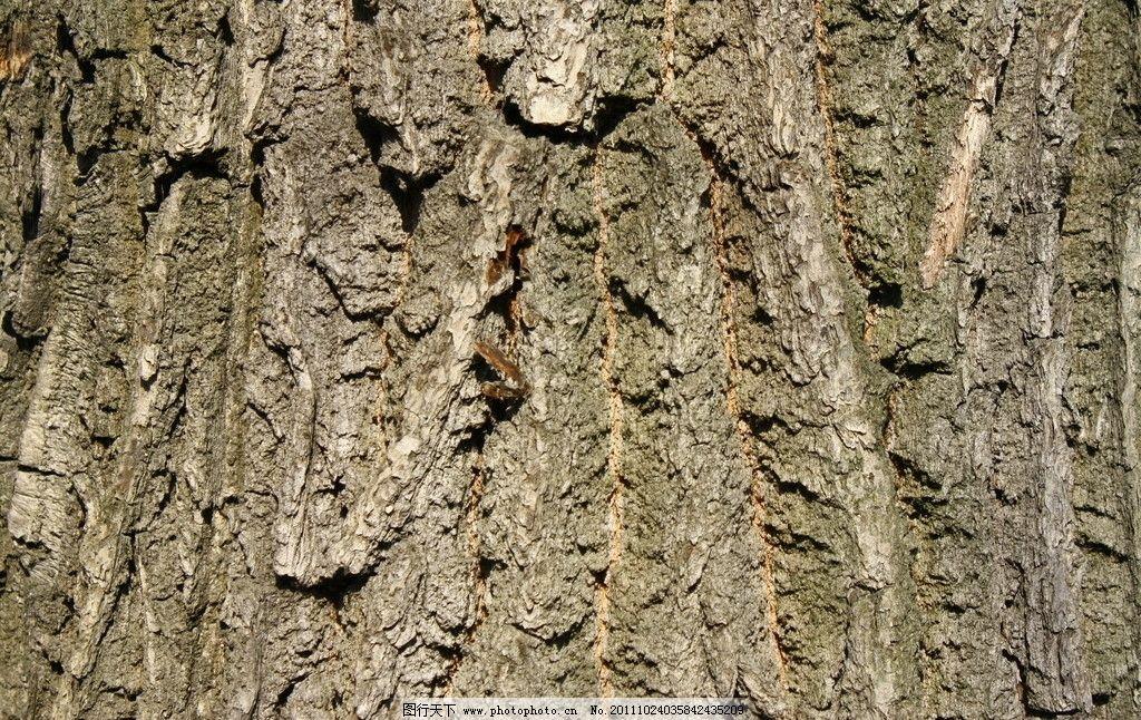 树皮 树皮木纹 树木树皮 树纹 木纹 树皮底纹 树皮背景 树皮材质 树木