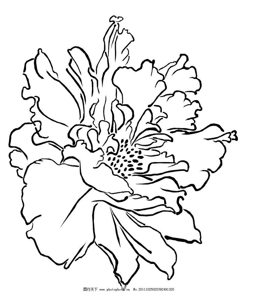 矢量牡丹花图片
