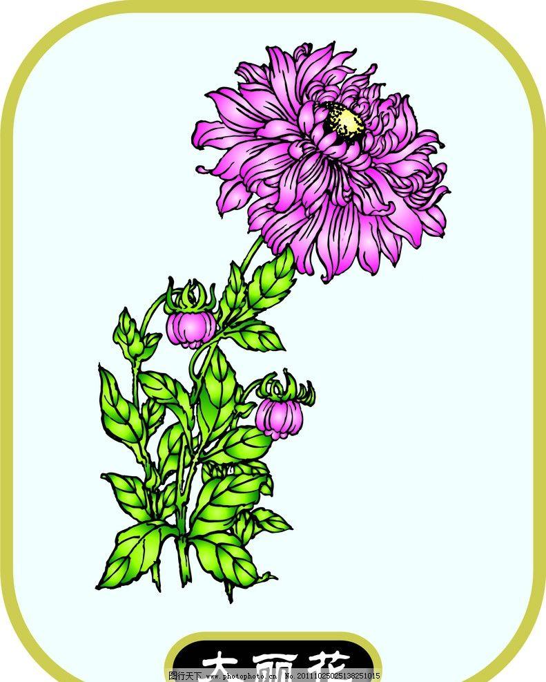 大丽花 植物 花卉 矢量