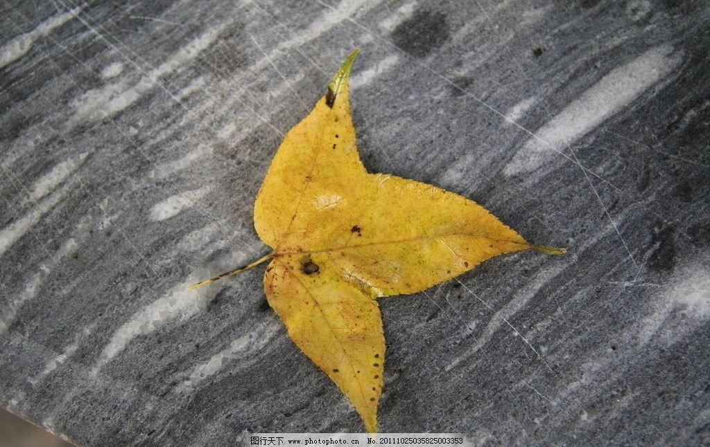 秋天的枫/秋天的枫叶图片