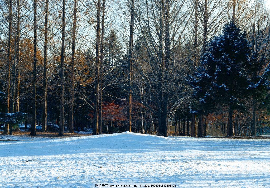 冬景 雪树 白雪 冬天 摄影