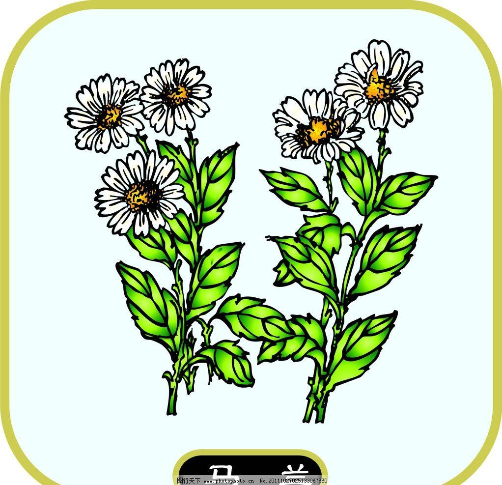 马兰 植物 花草 花卉 生物世界 矢量 cdr